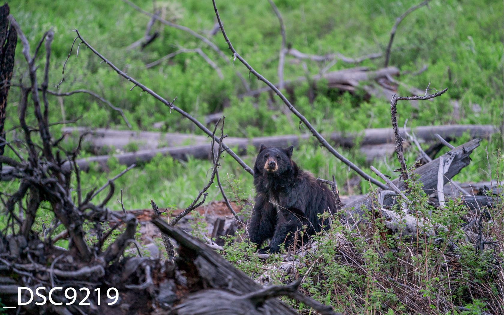 Just Bears-001.jpg