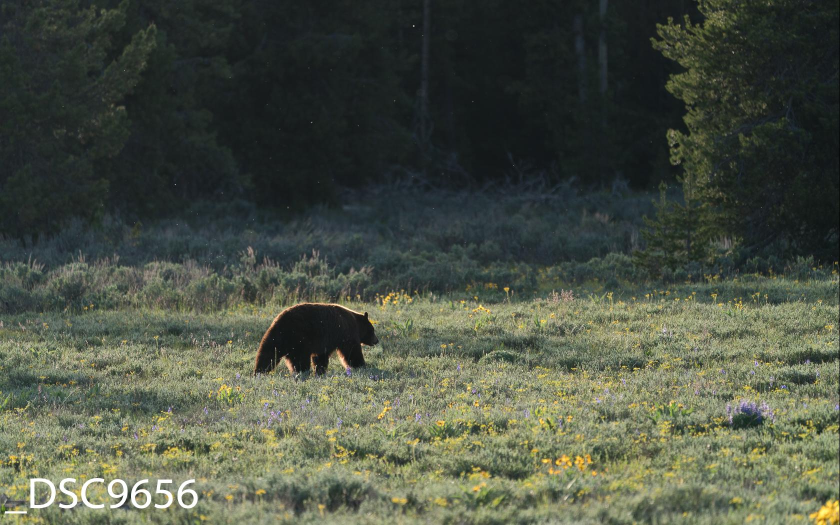 Just Bears-003.jpg