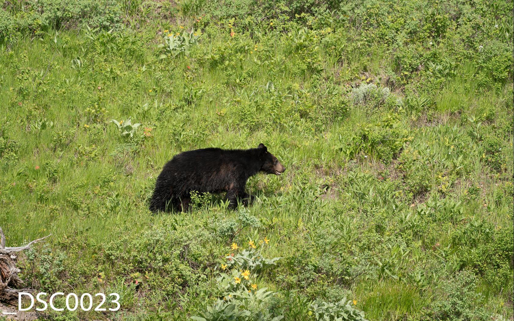 Just Bears-004.jpg