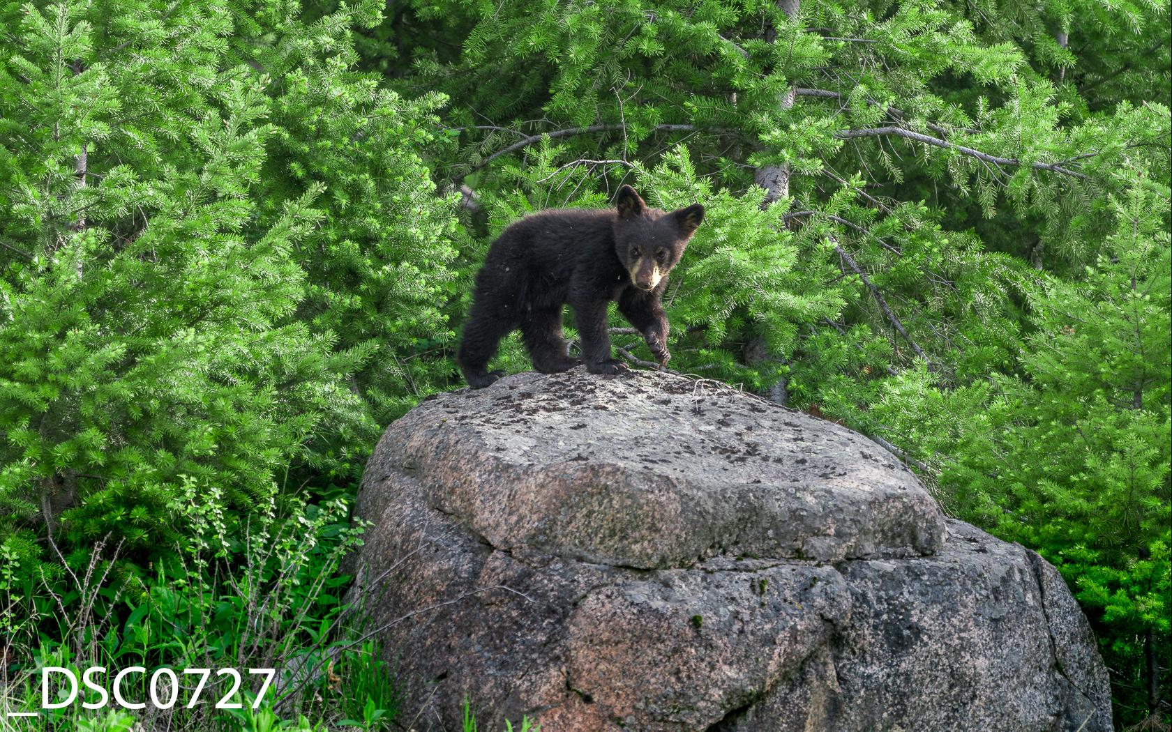 Just Bears-005.jpg