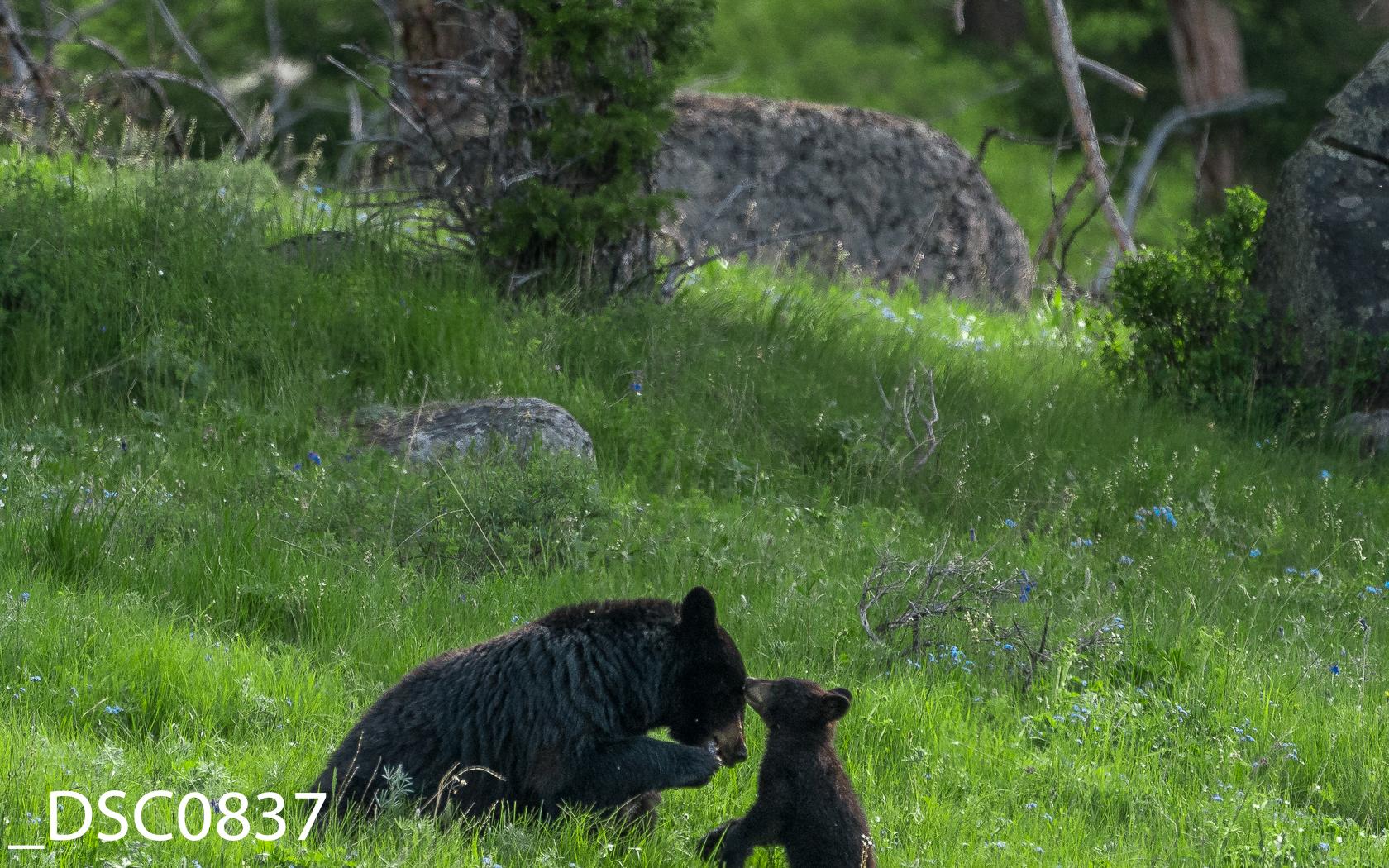 Just Bears-006.jpg
