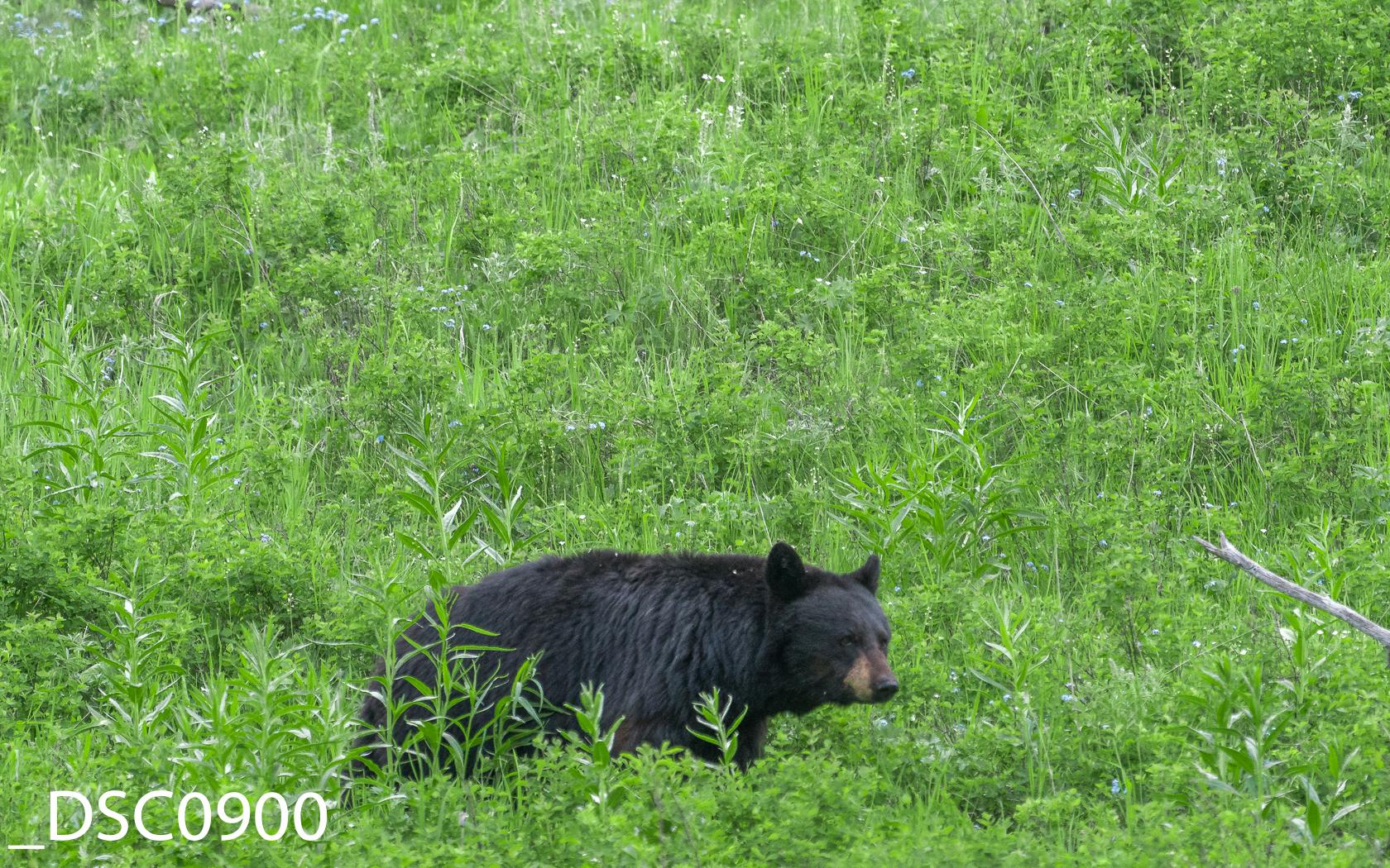Just Bears-008.jpg