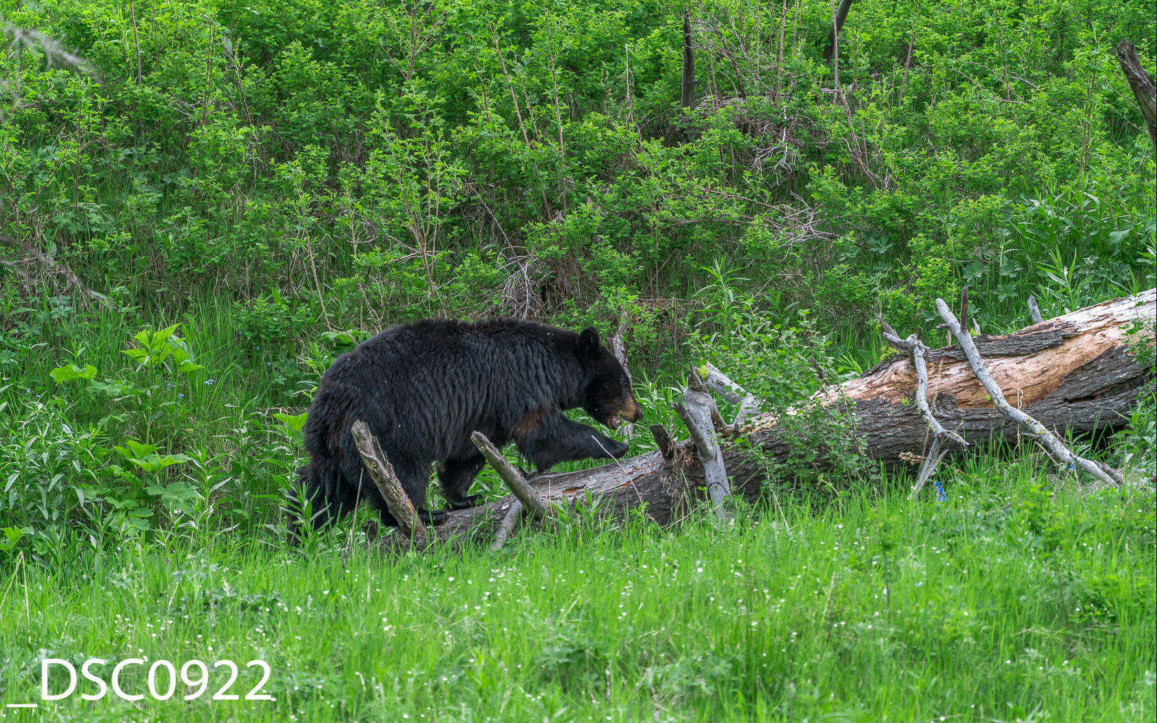 Just Bears-009.jpg