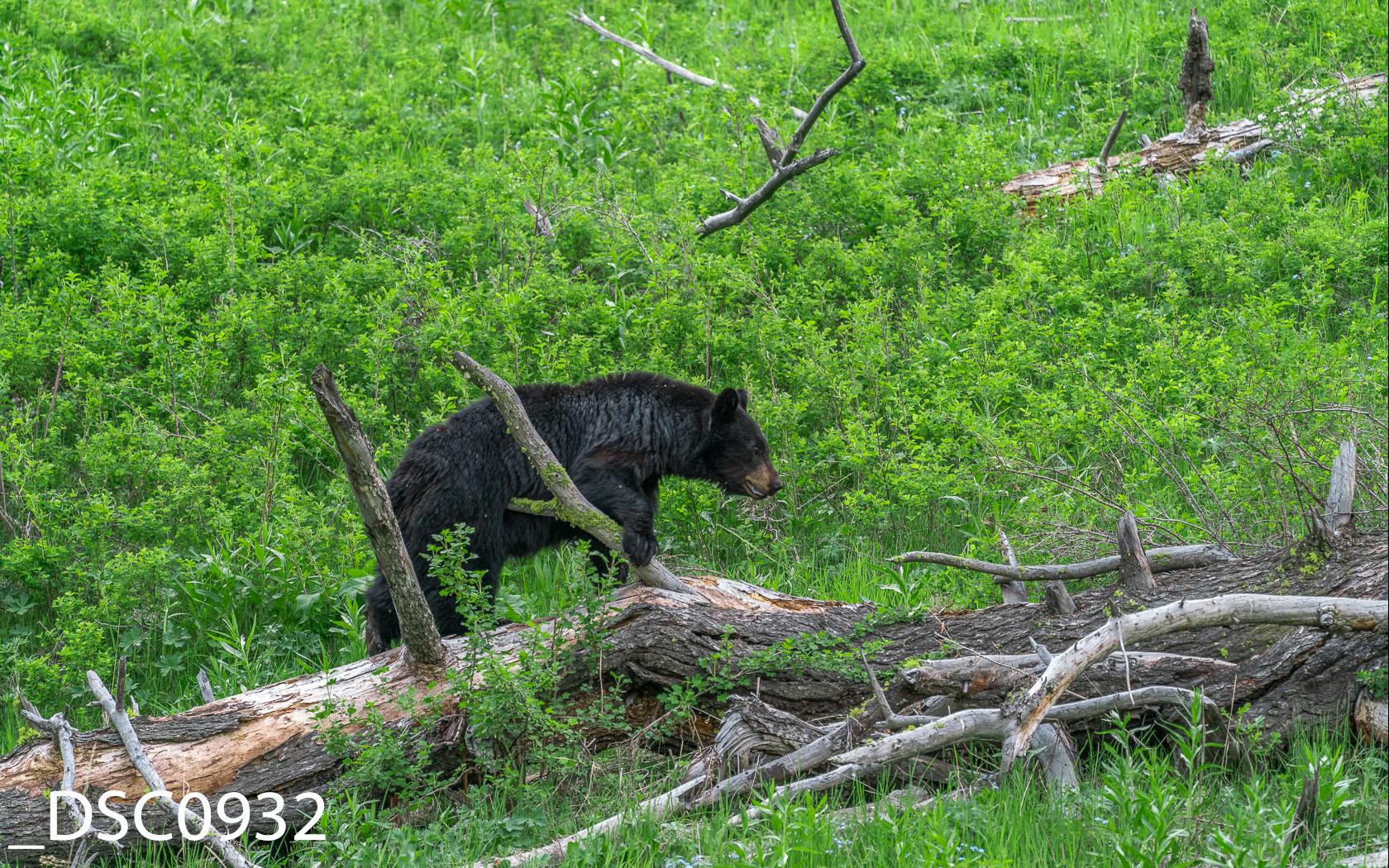 Just Bears-011.jpg