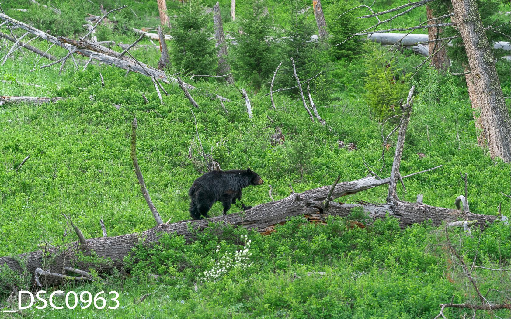 Just Bears-012.jpg