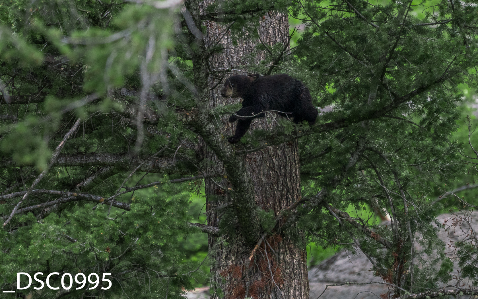 Just Bears-013.jpg