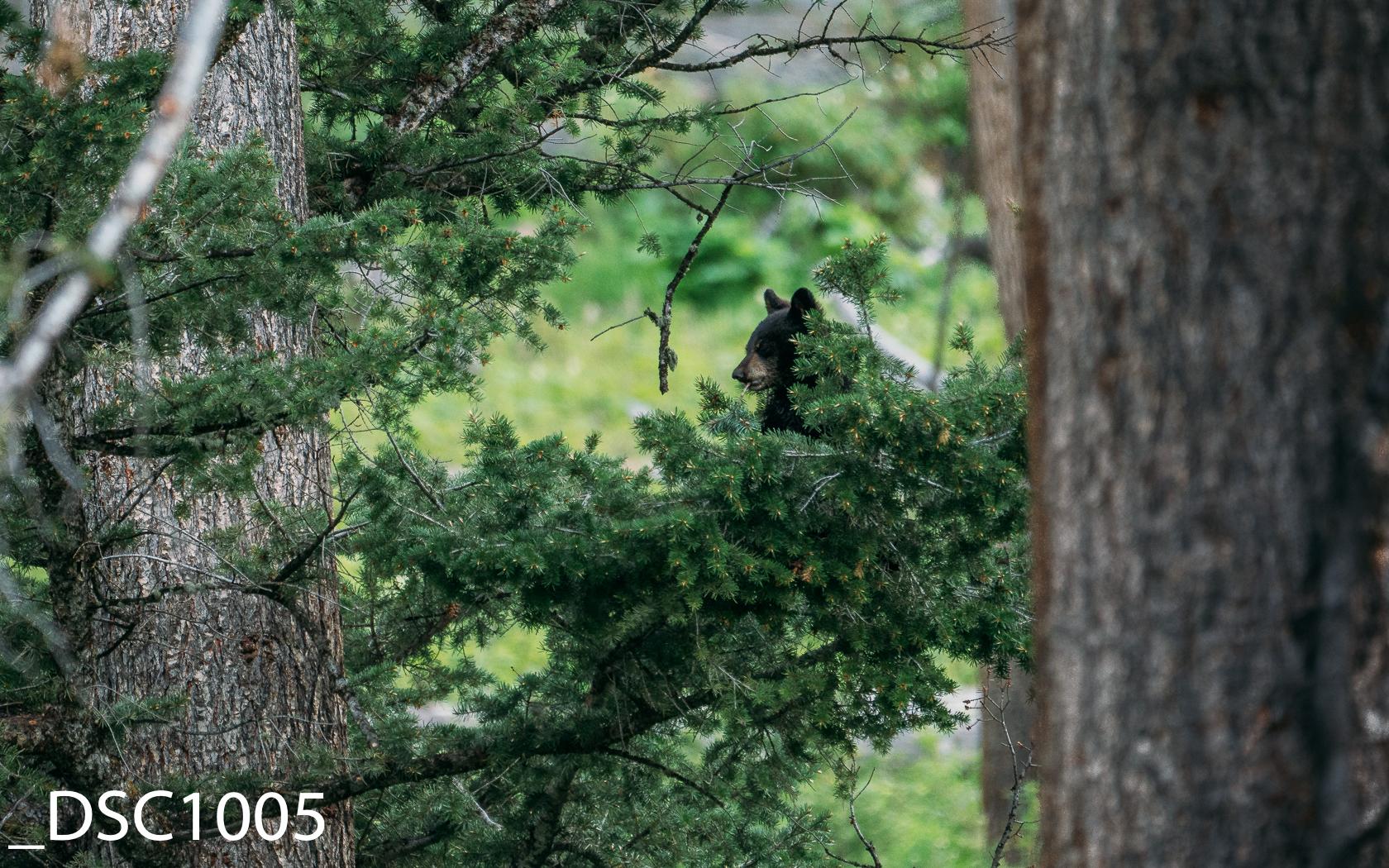 Just Bears-014.jpg