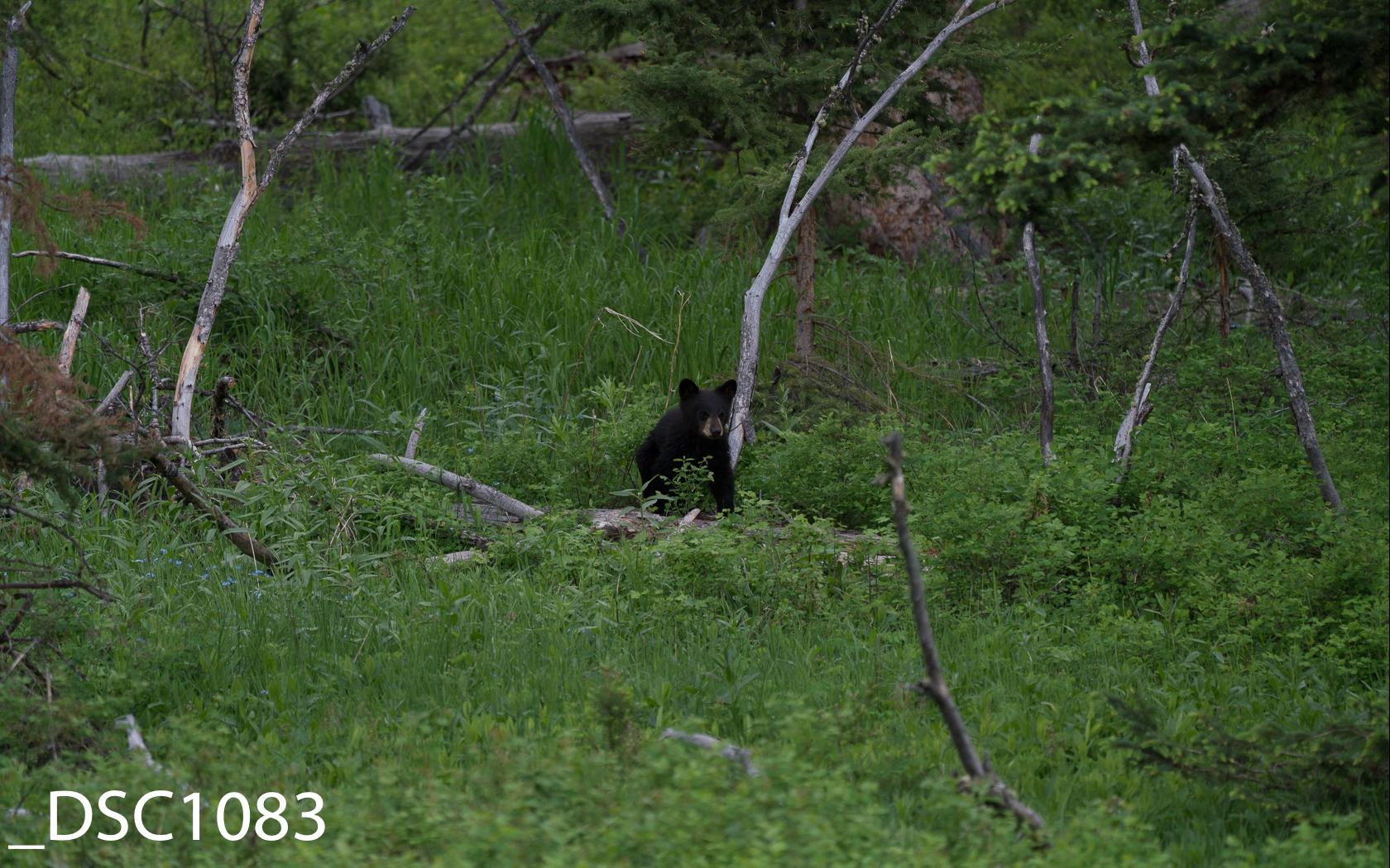 Just Bears-015.jpg