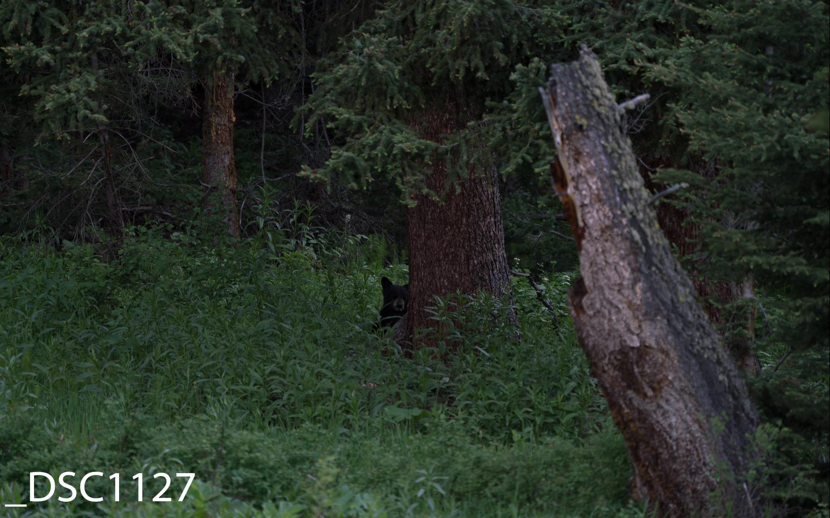 Just Bears-017.jpg