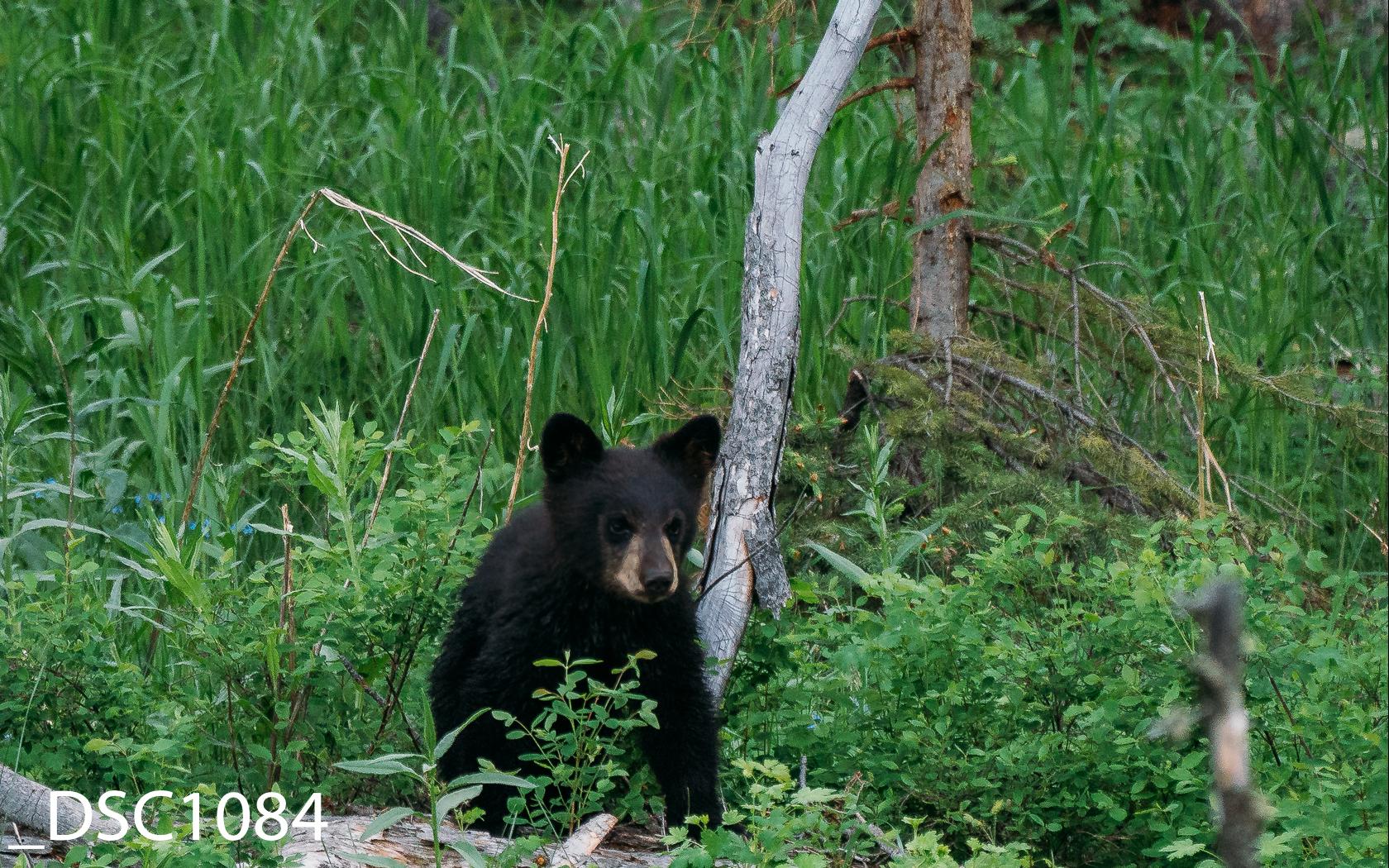 Just Bears-016.jpg