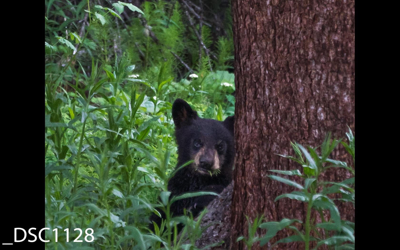 Just Bears-018.jpg