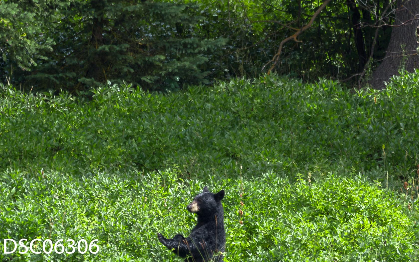 Just Bears-019.jpg