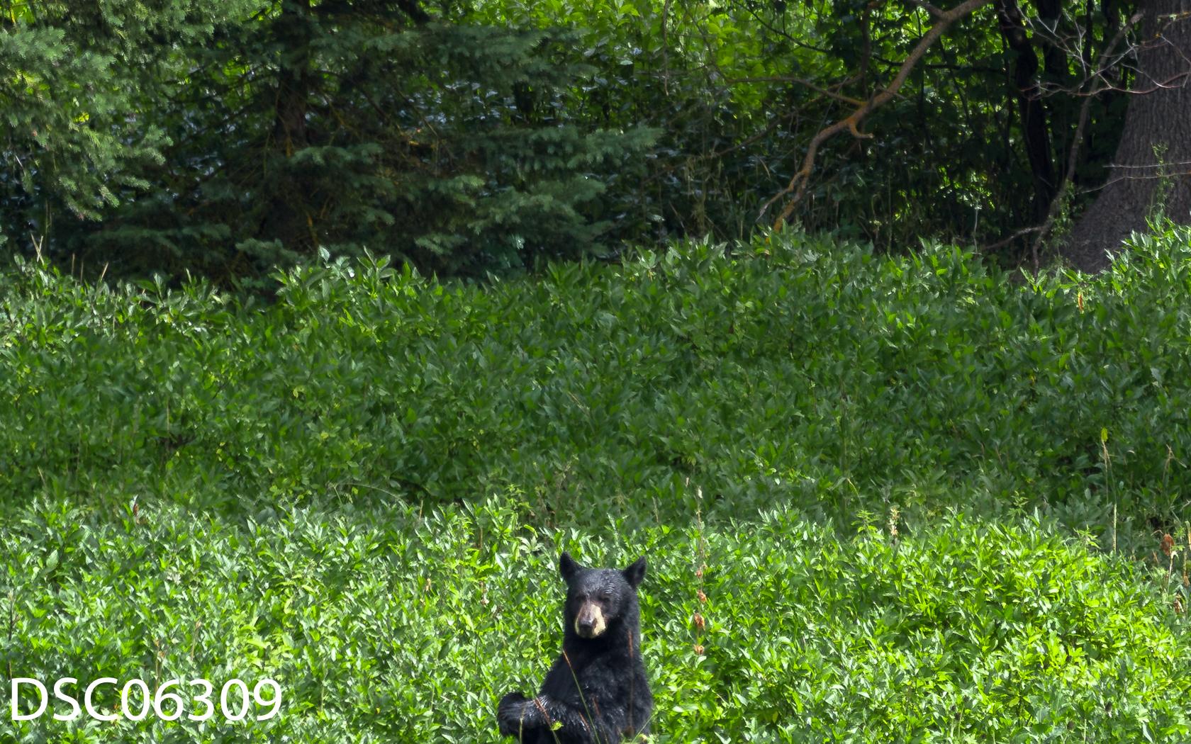Just Bears-020.jpg