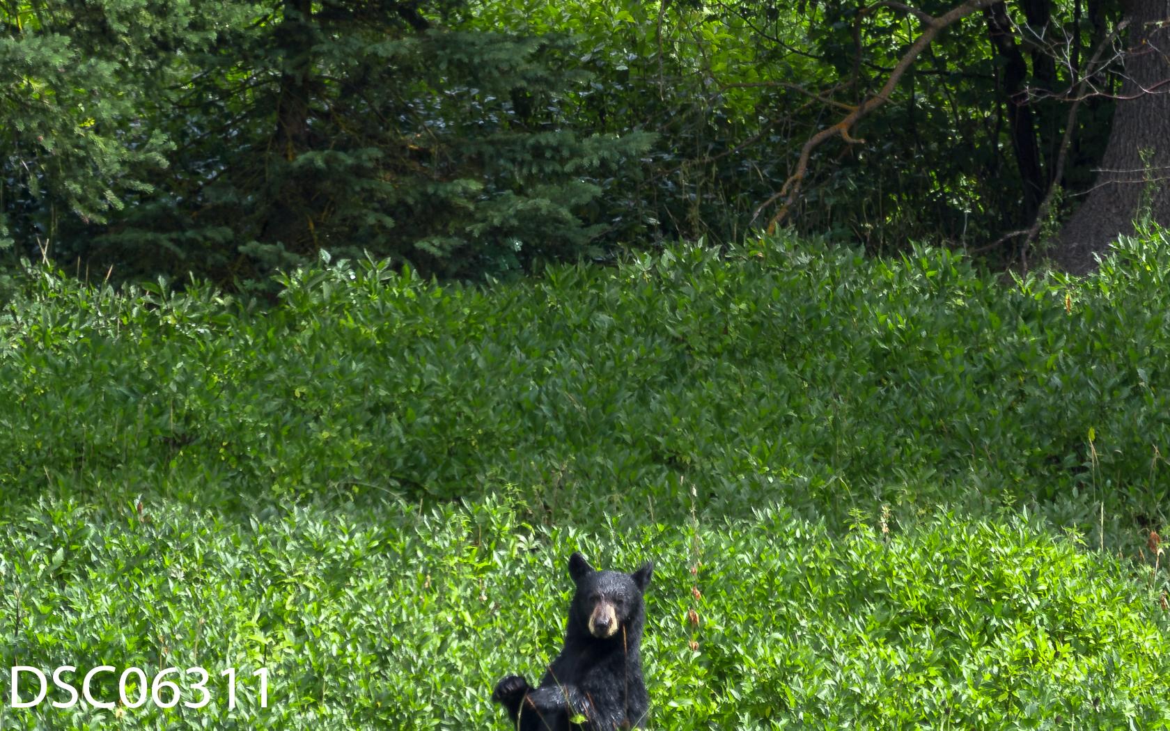 Just Bears-021.jpg