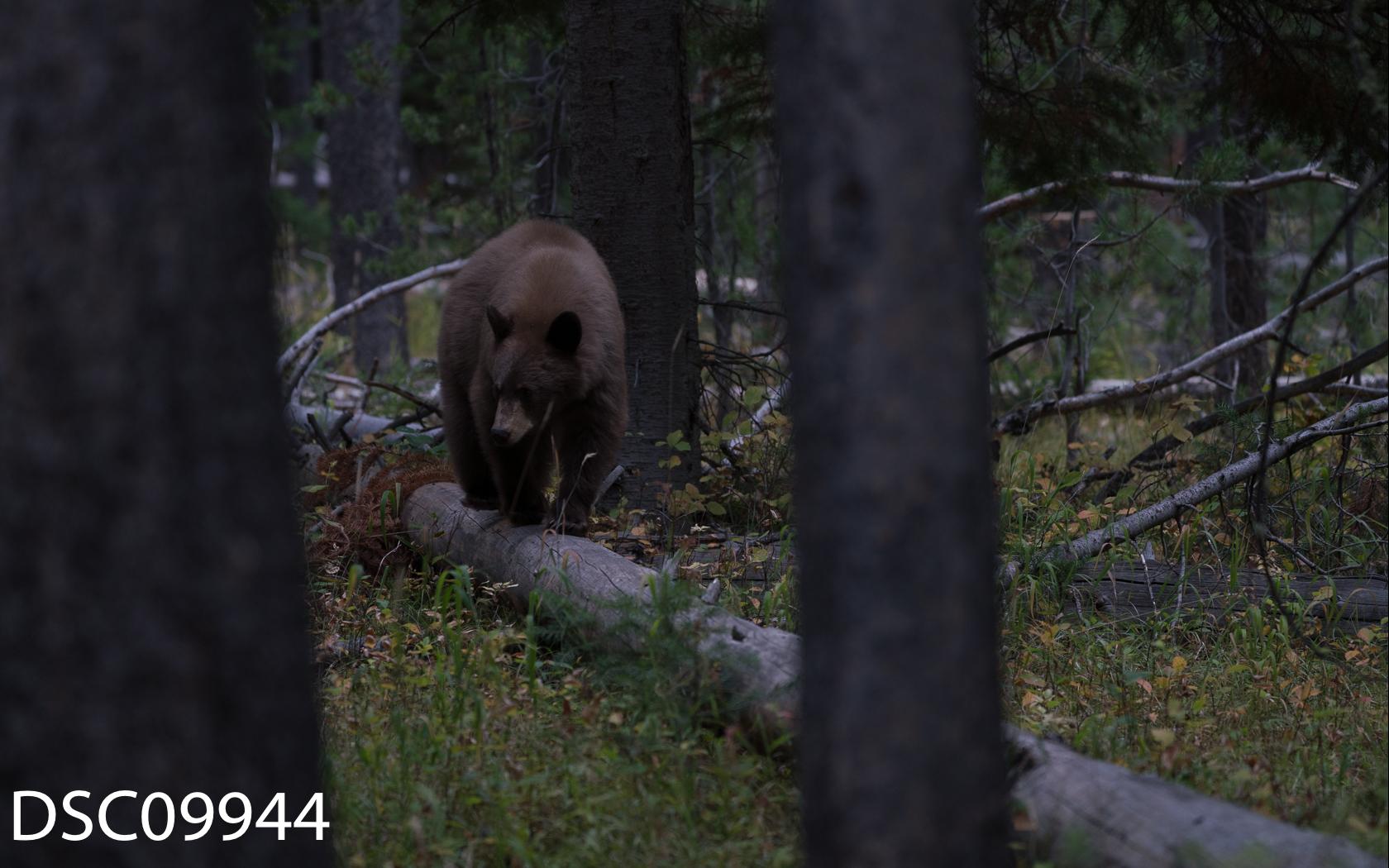 Just Bears-023.jpg