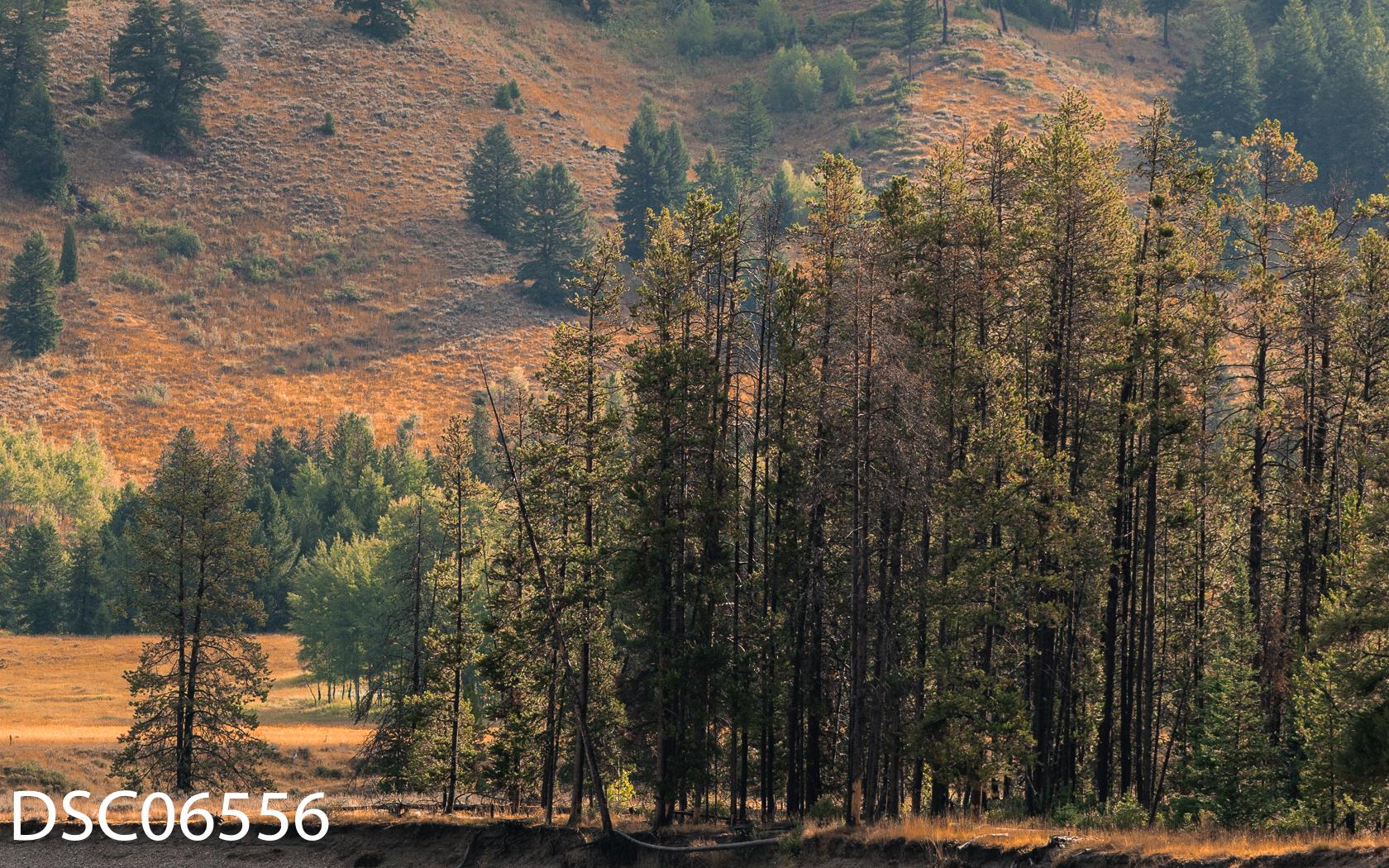 Landscapes-28.jpg
