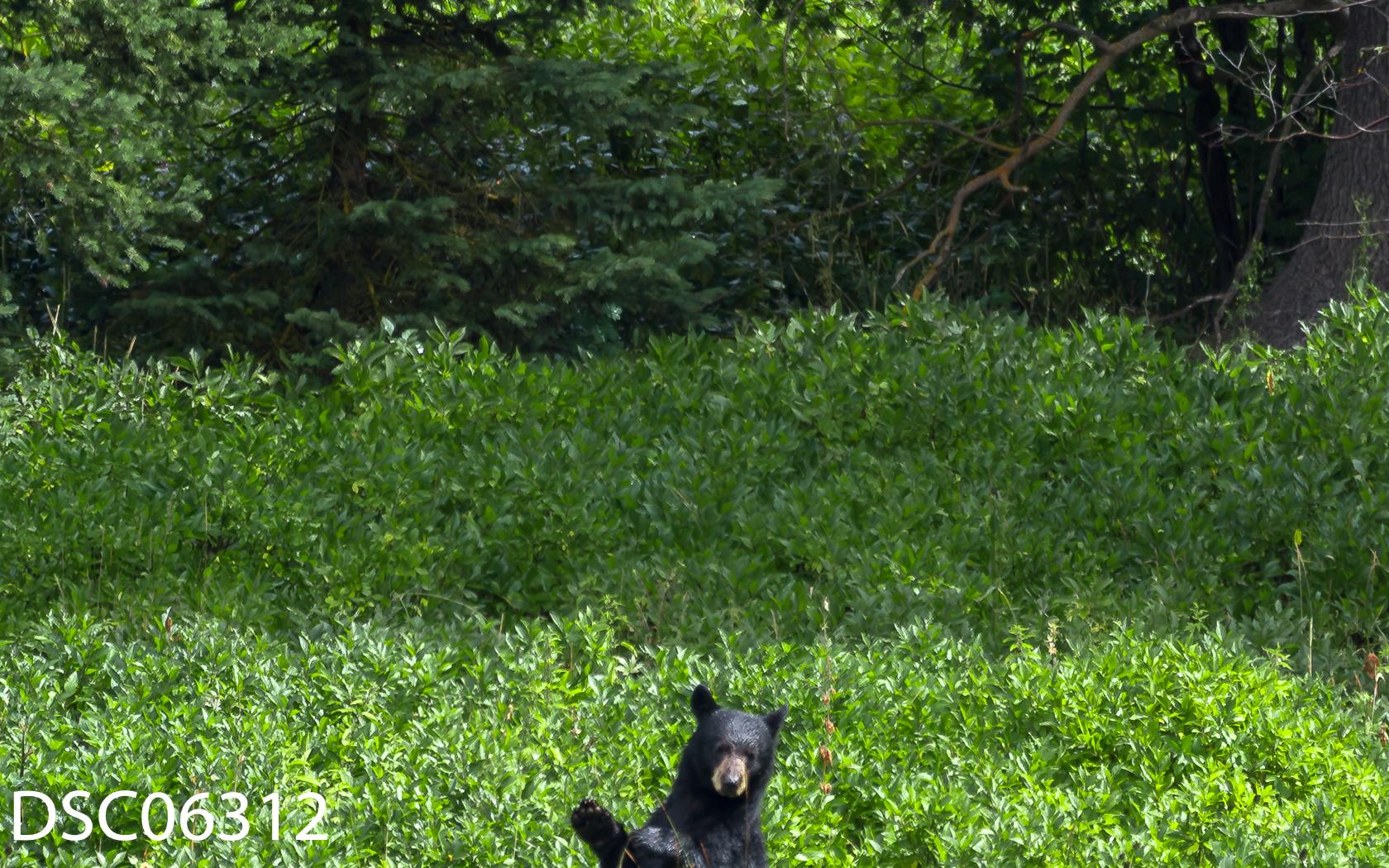 Just Bears-022.jpg