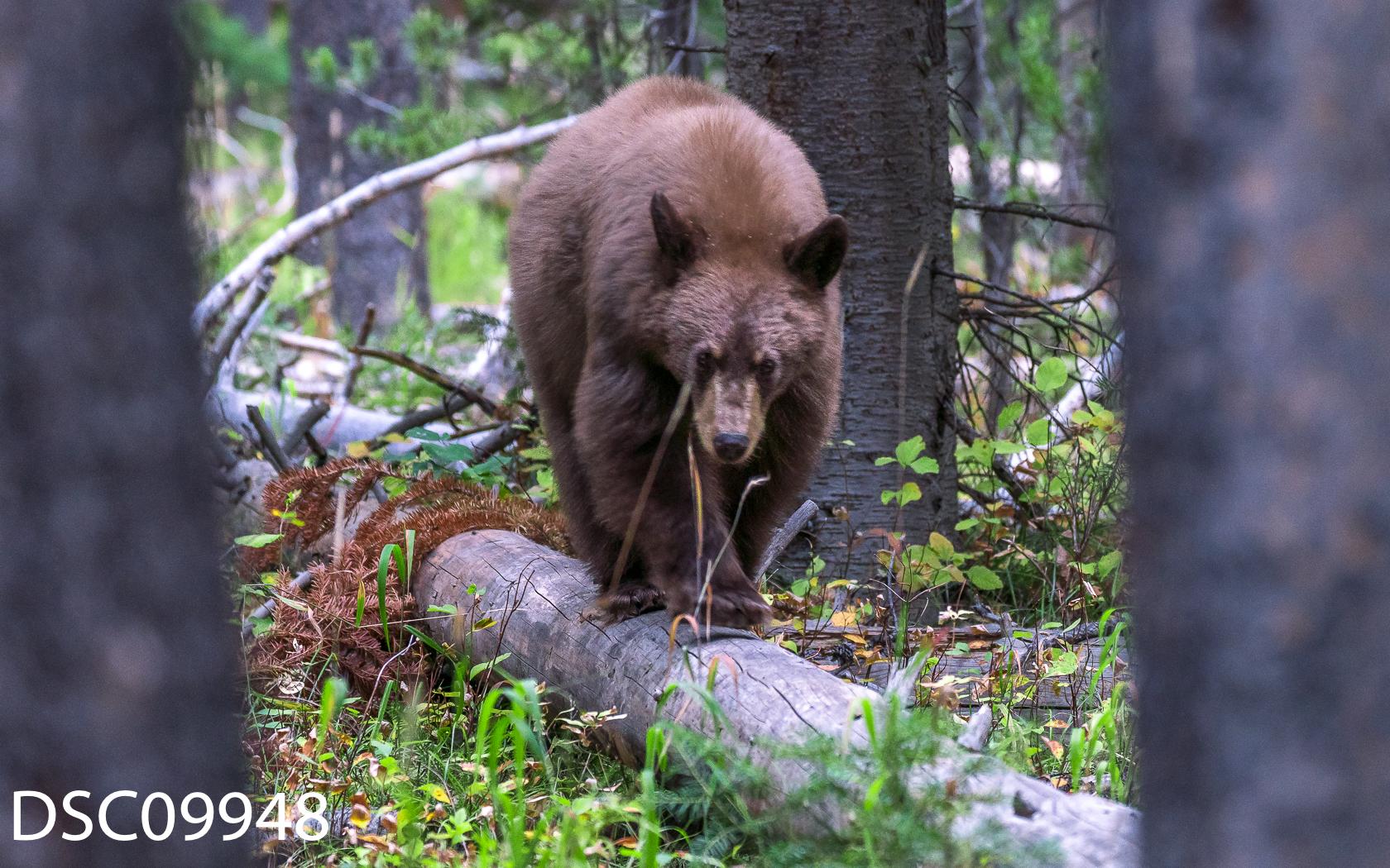 Just Bears-024.jpg