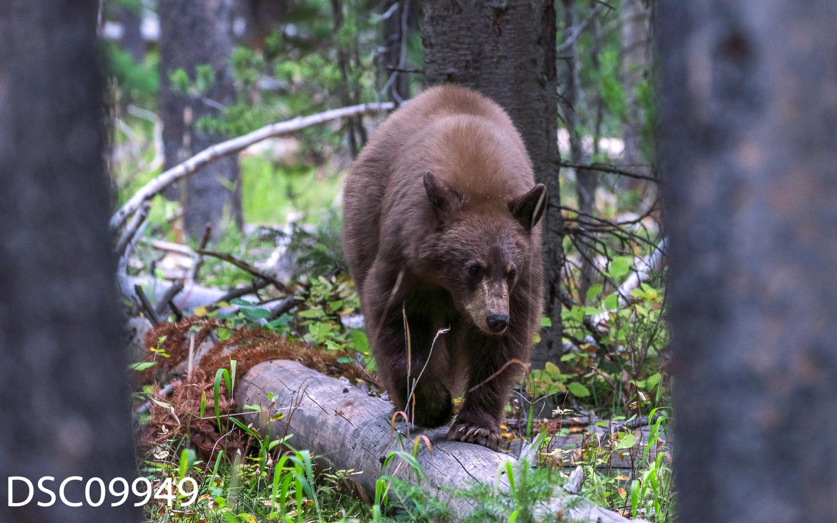 Just Bears-025.jpg