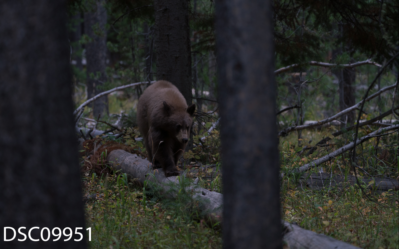 Just Bears-026.jpg