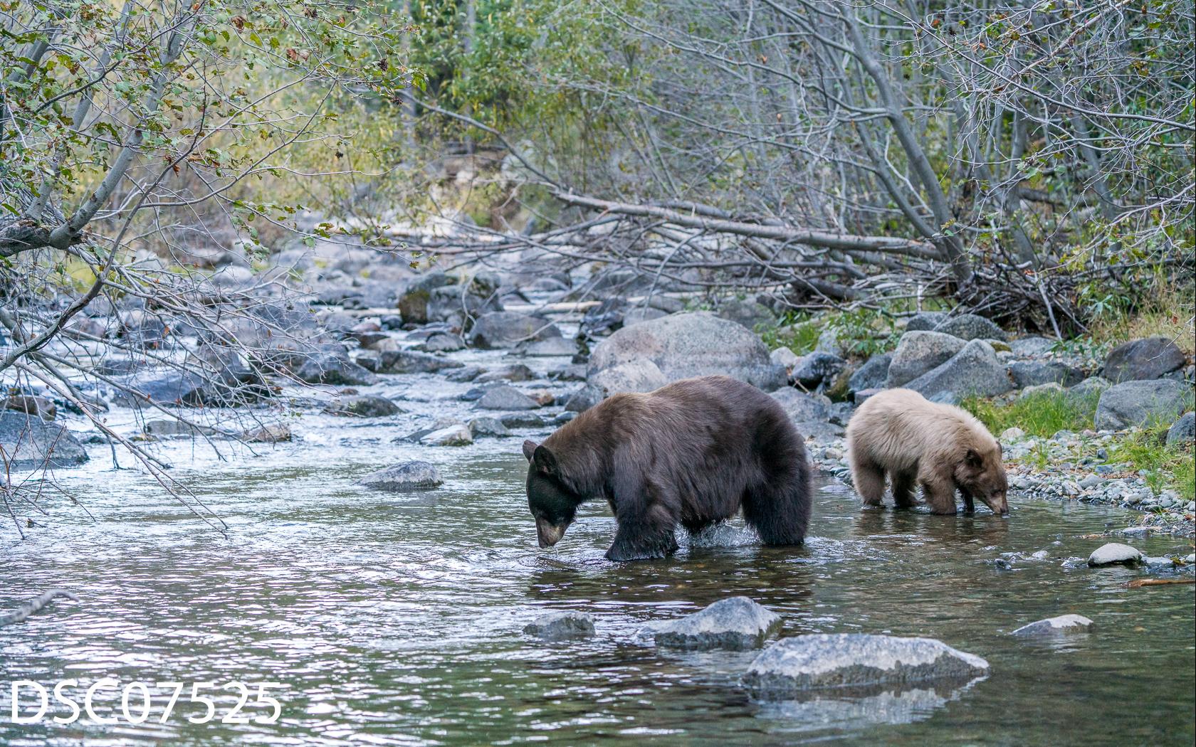 Just Bears-028.jpg