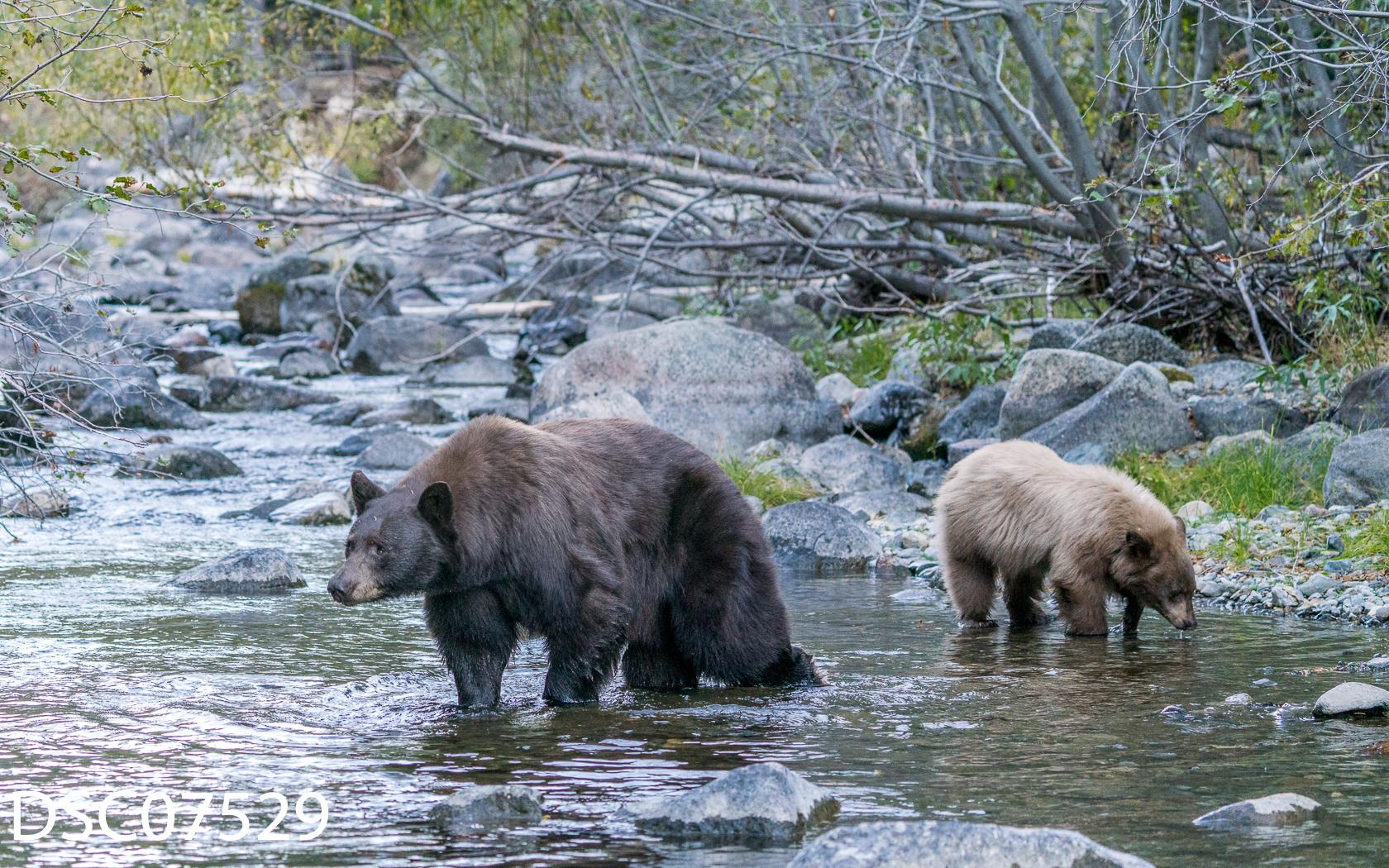 Just Bears-029.jpg