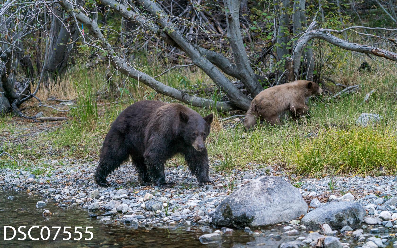 Just Bears-030.jpg