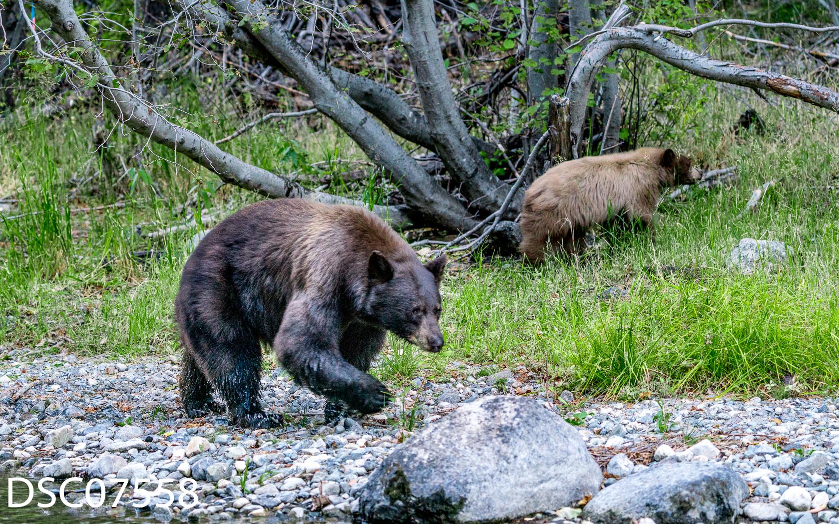 Just Bears-031.jpg