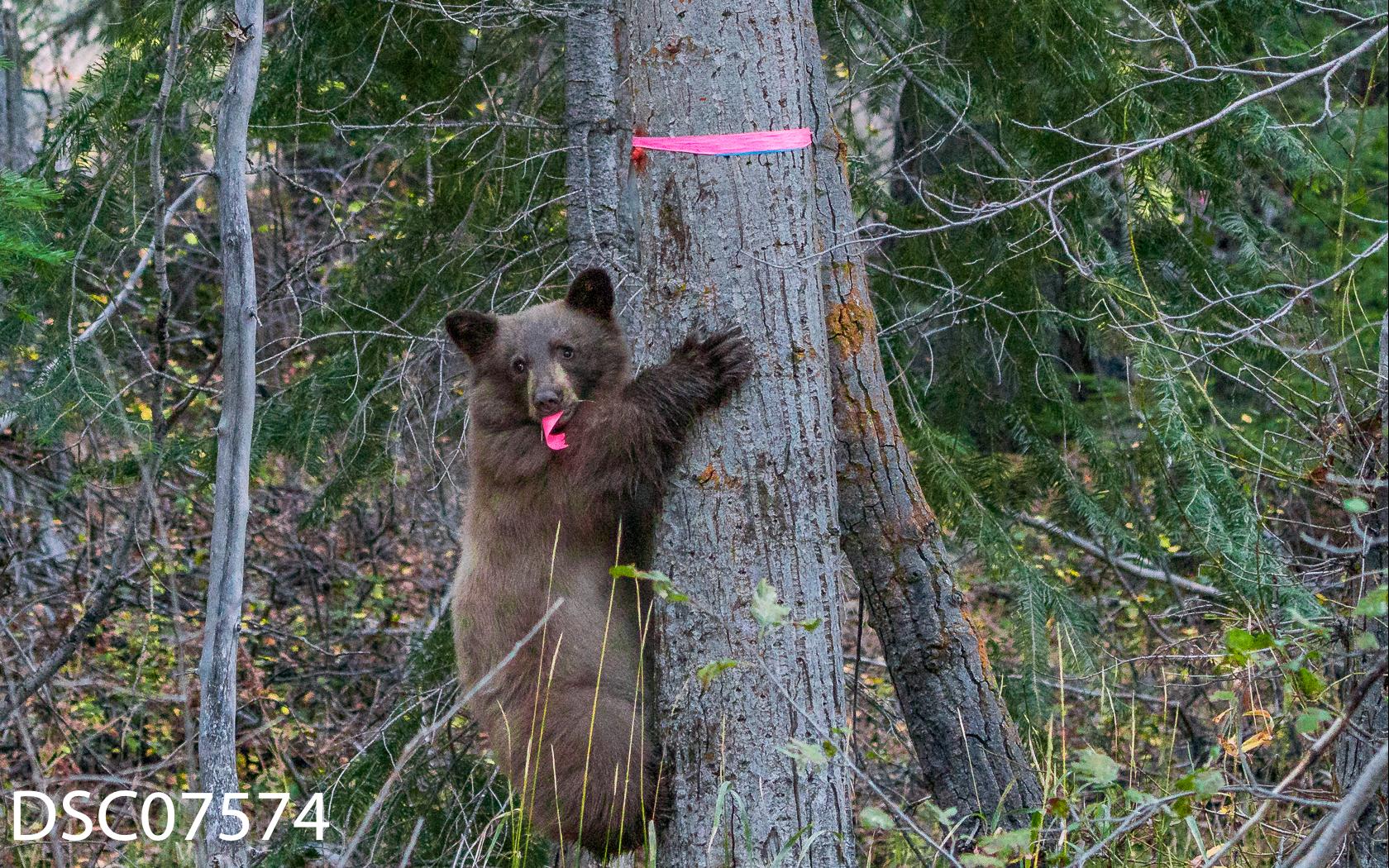 Just Bears-033.jpg
