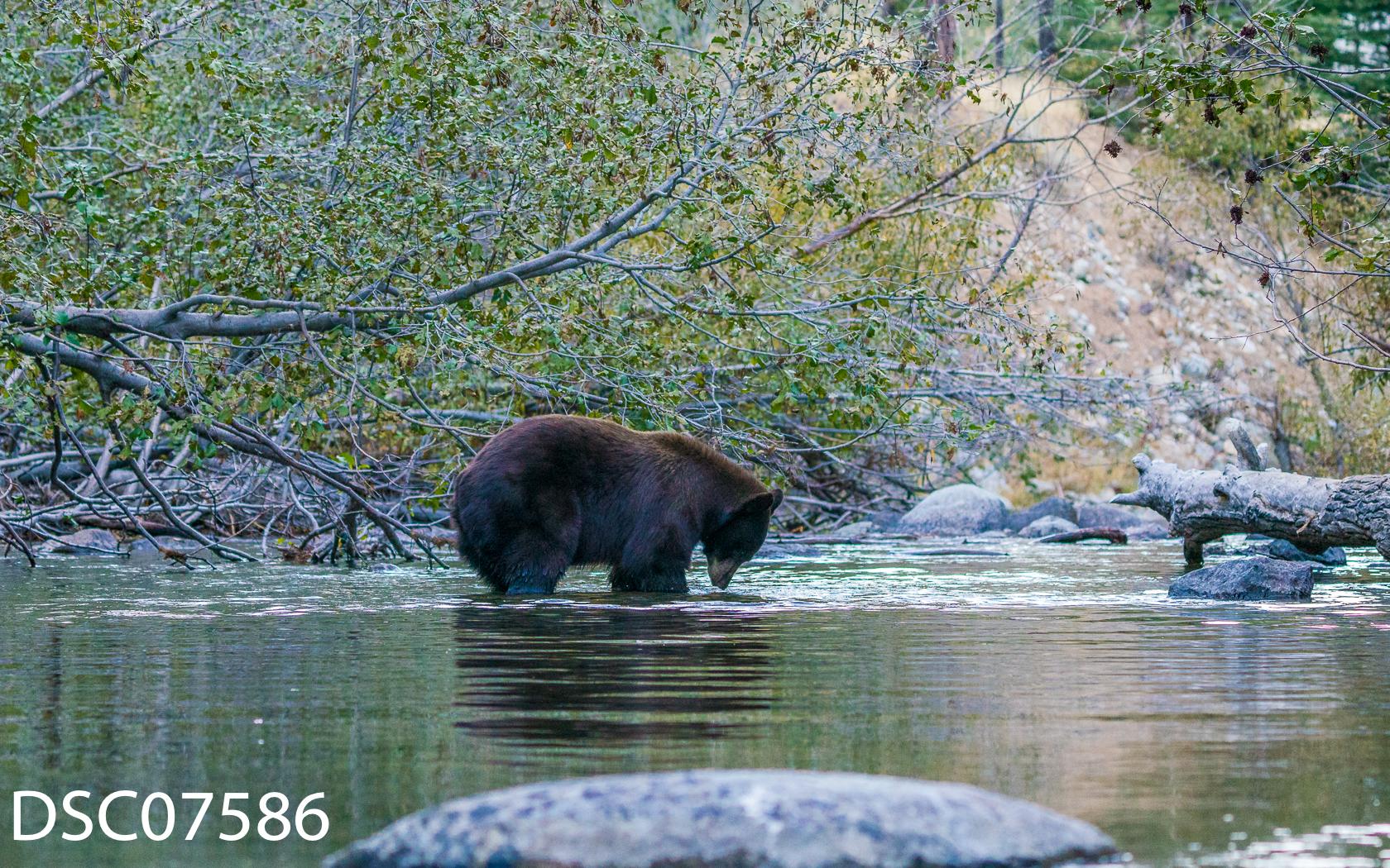 Just Bears-034.jpg