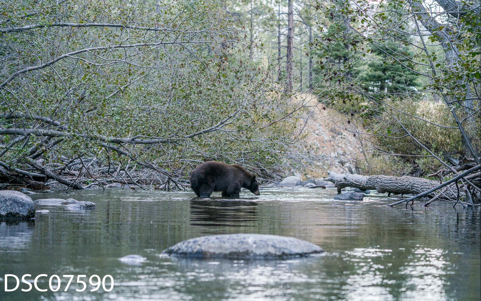 Just Bears-035.jpg