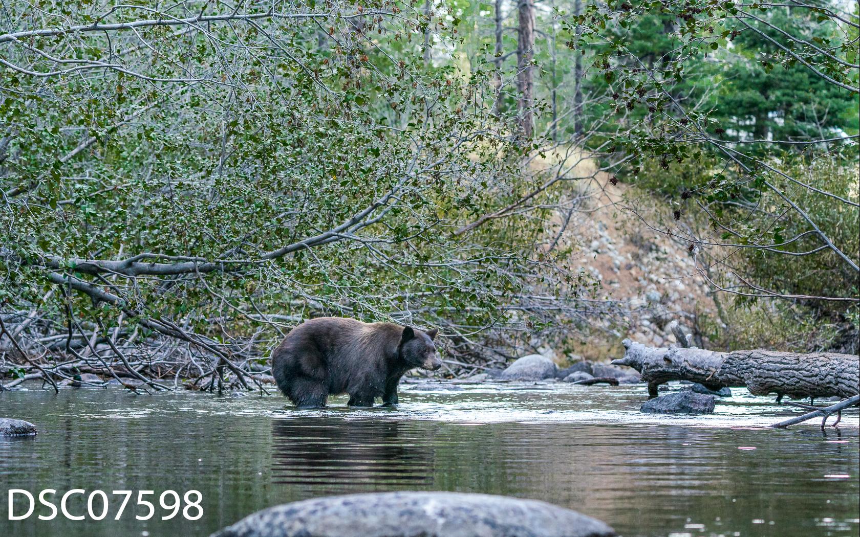 Just Bears-036.jpg