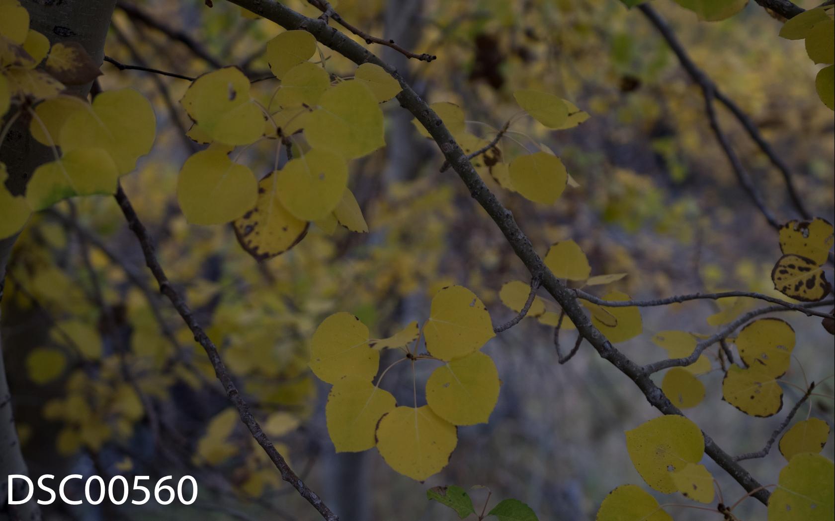 Landscapes-50.jpg