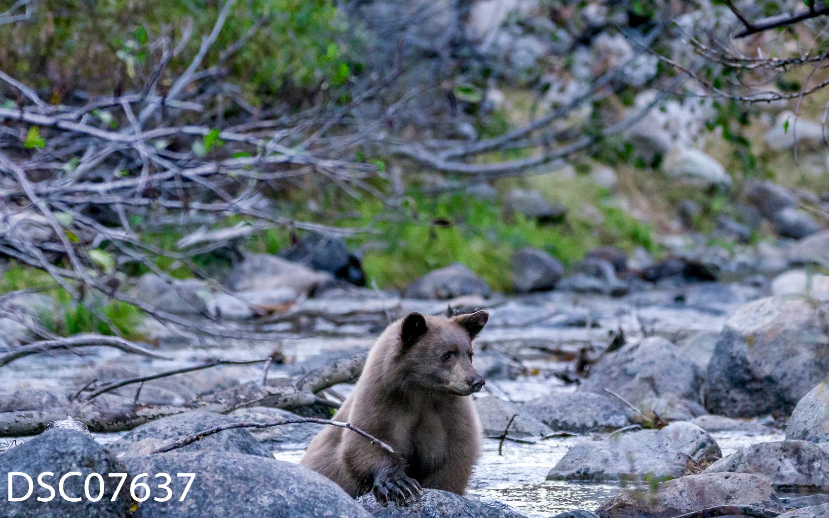 Just Bears-038.jpg