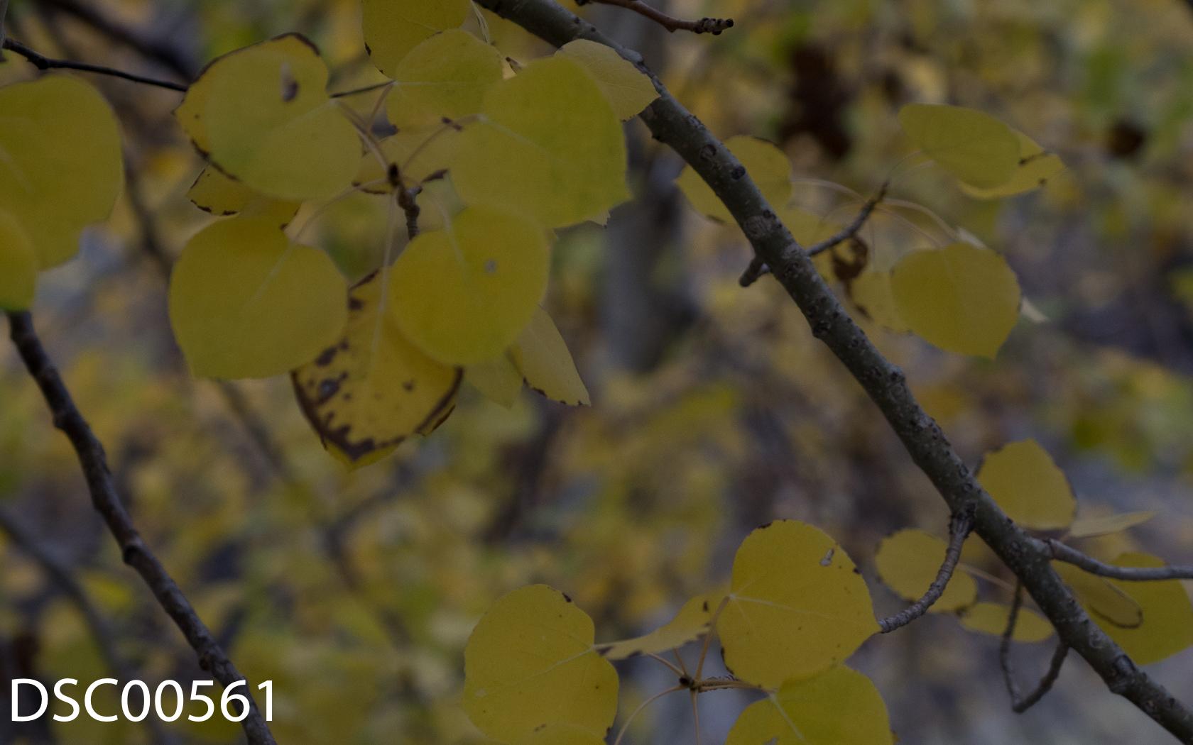 Landscapes-51.jpg