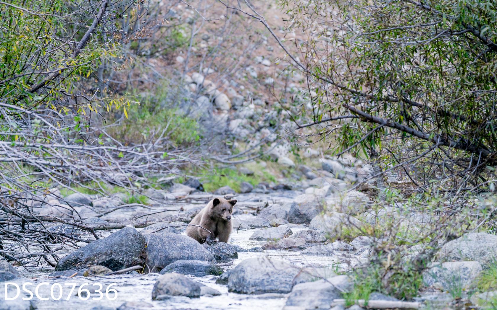 Just Bears-037.jpg