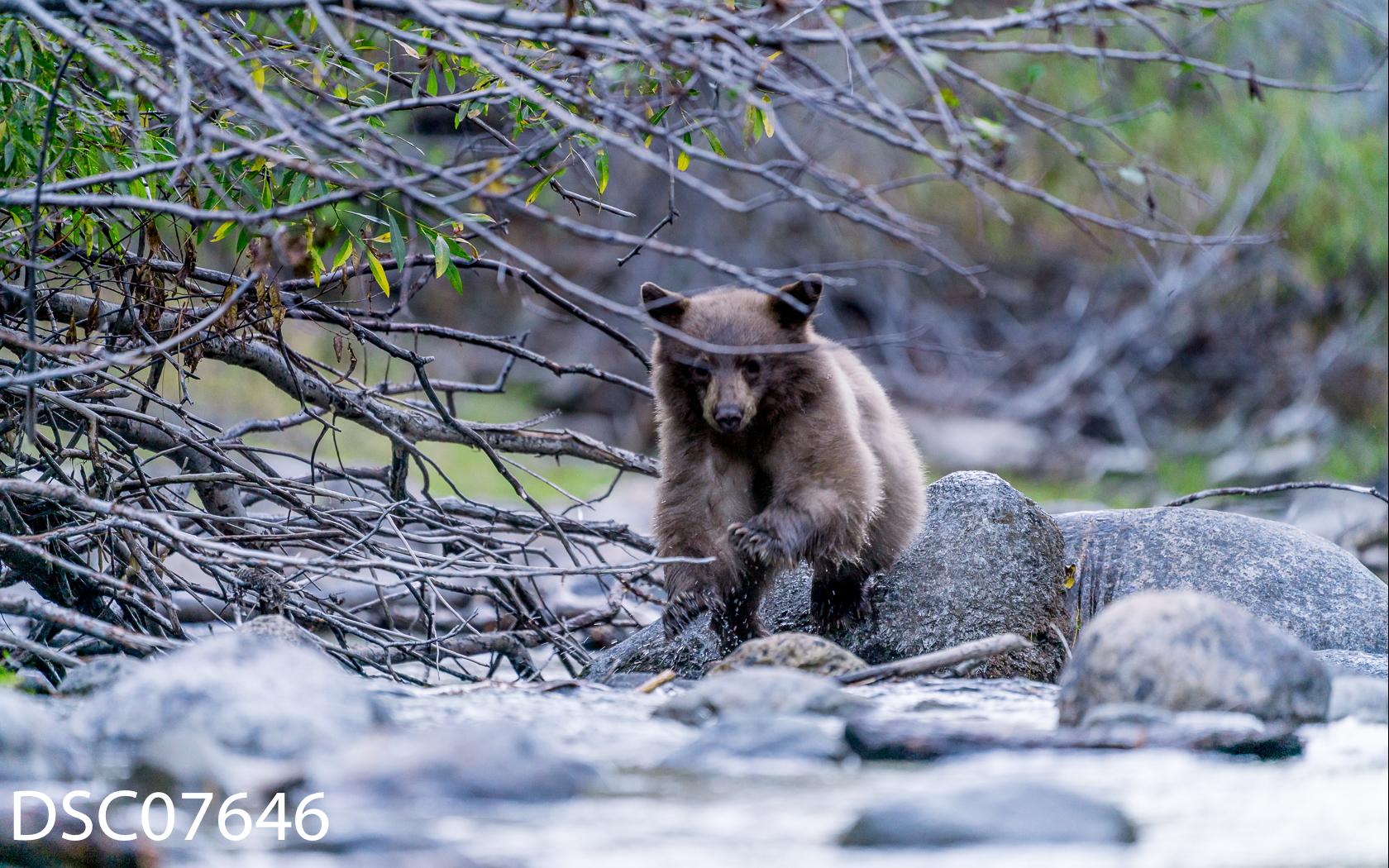 Just Bears-040.jpg