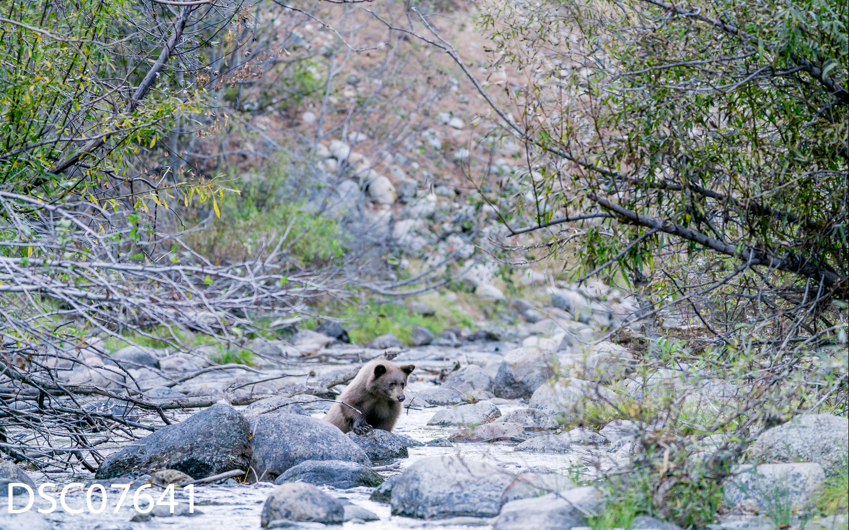 Just Bears-039.jpg