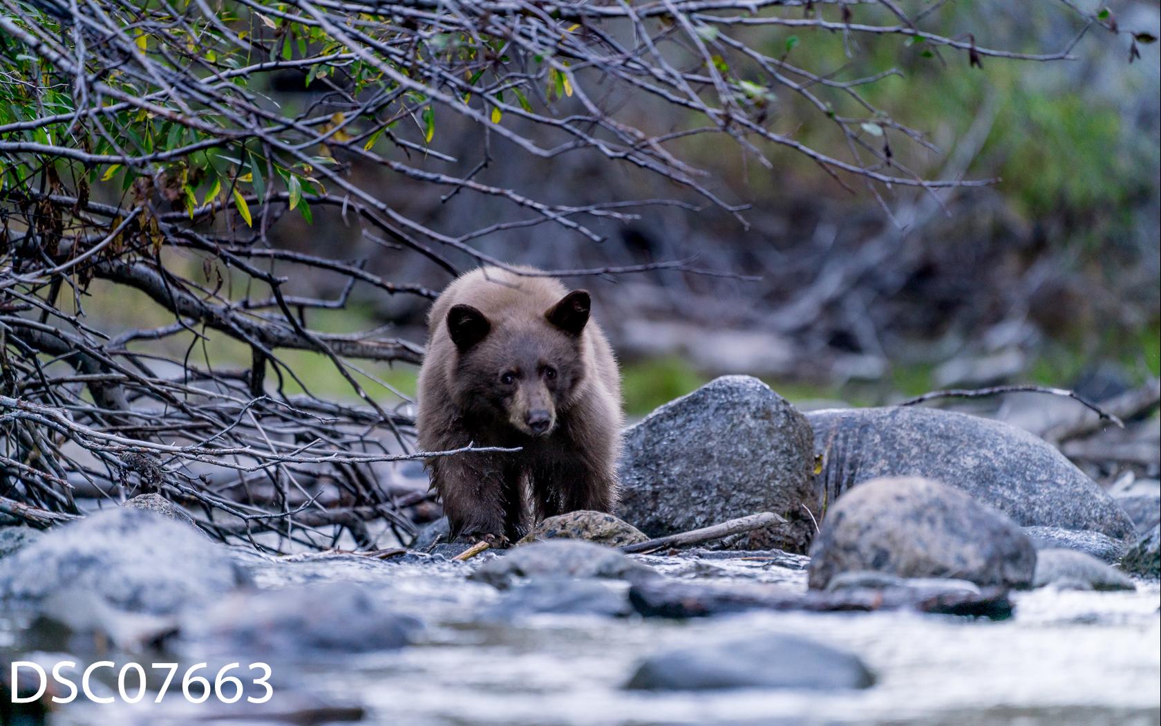 Just Bears-041.jpg