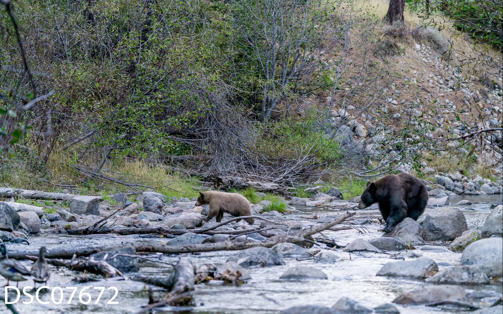 Just Bears-042.jpg