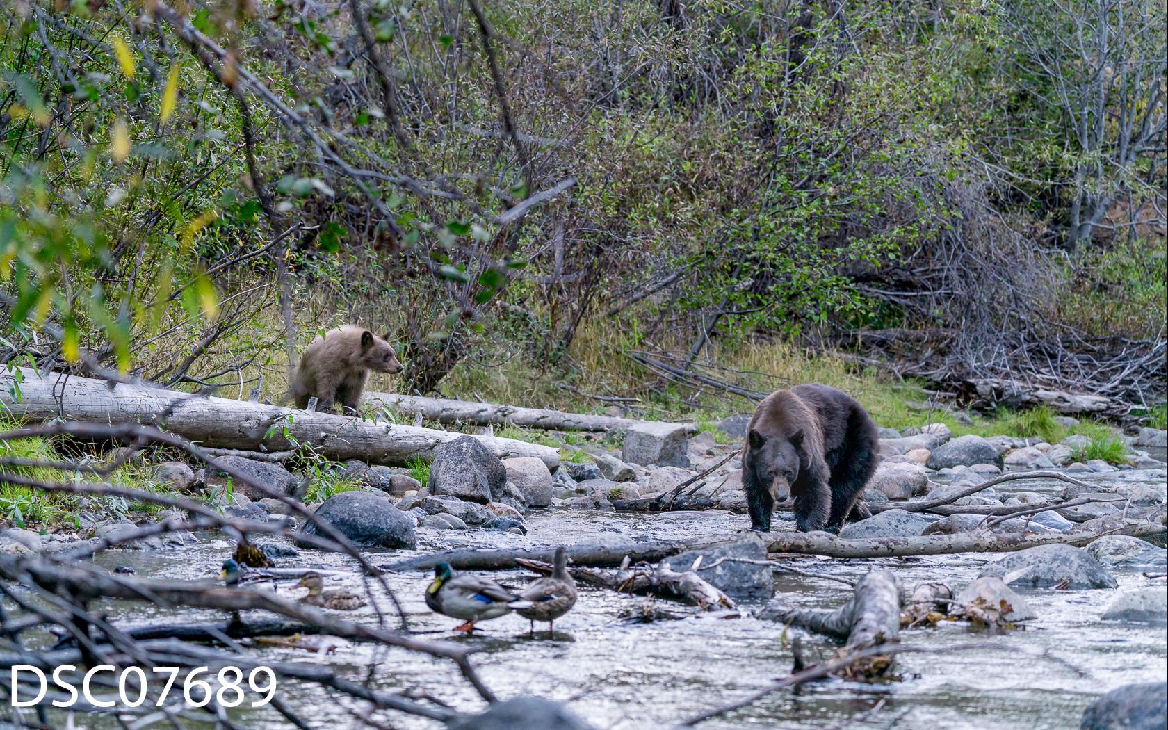 Just Bears-043.jpg