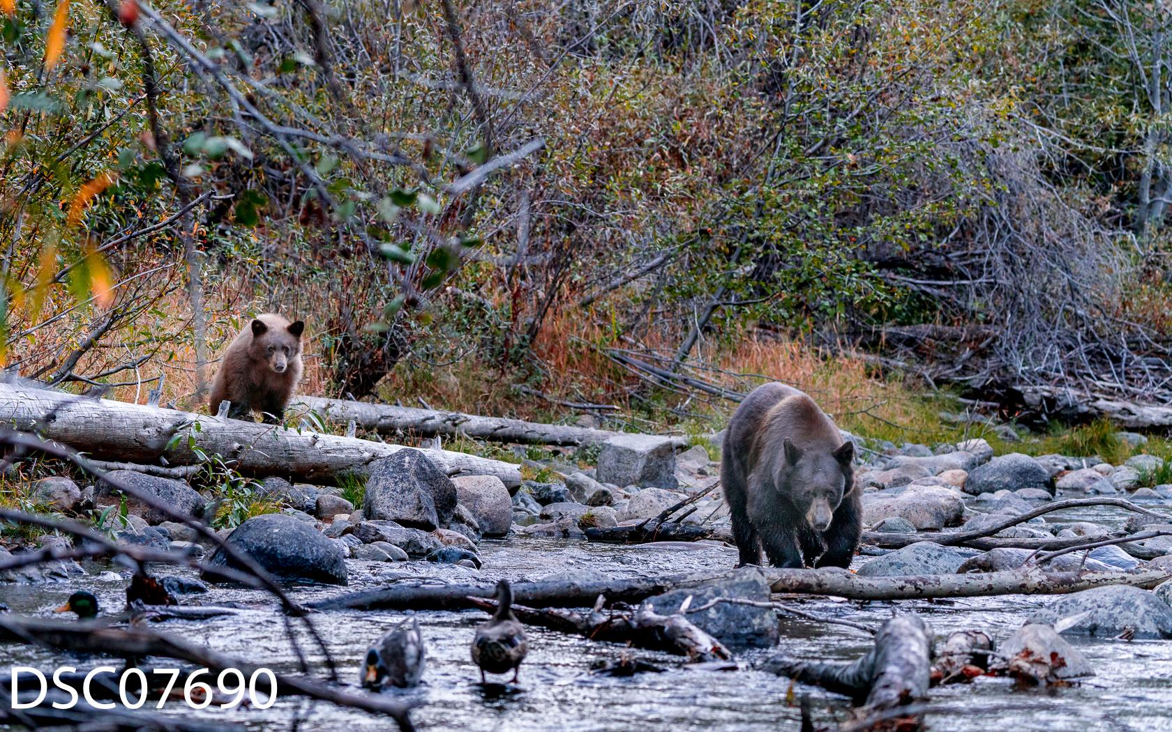 Just Bears-044.jpg