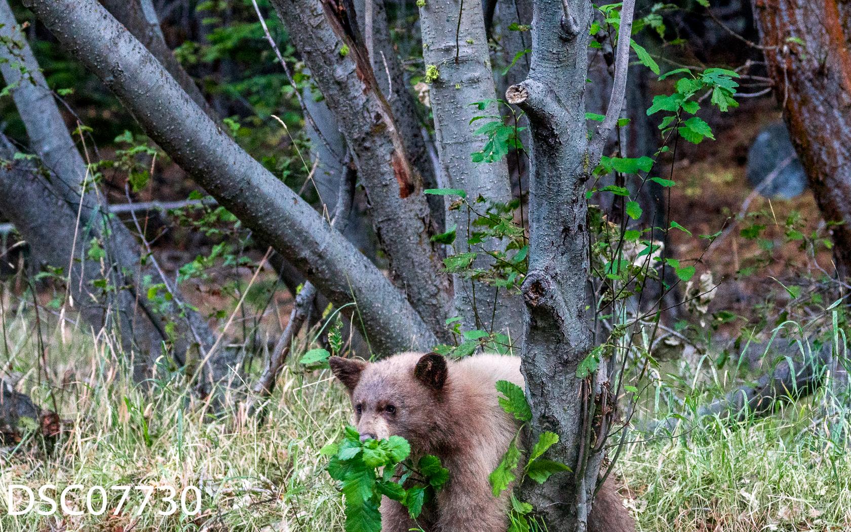 Just Bears-045.jpg