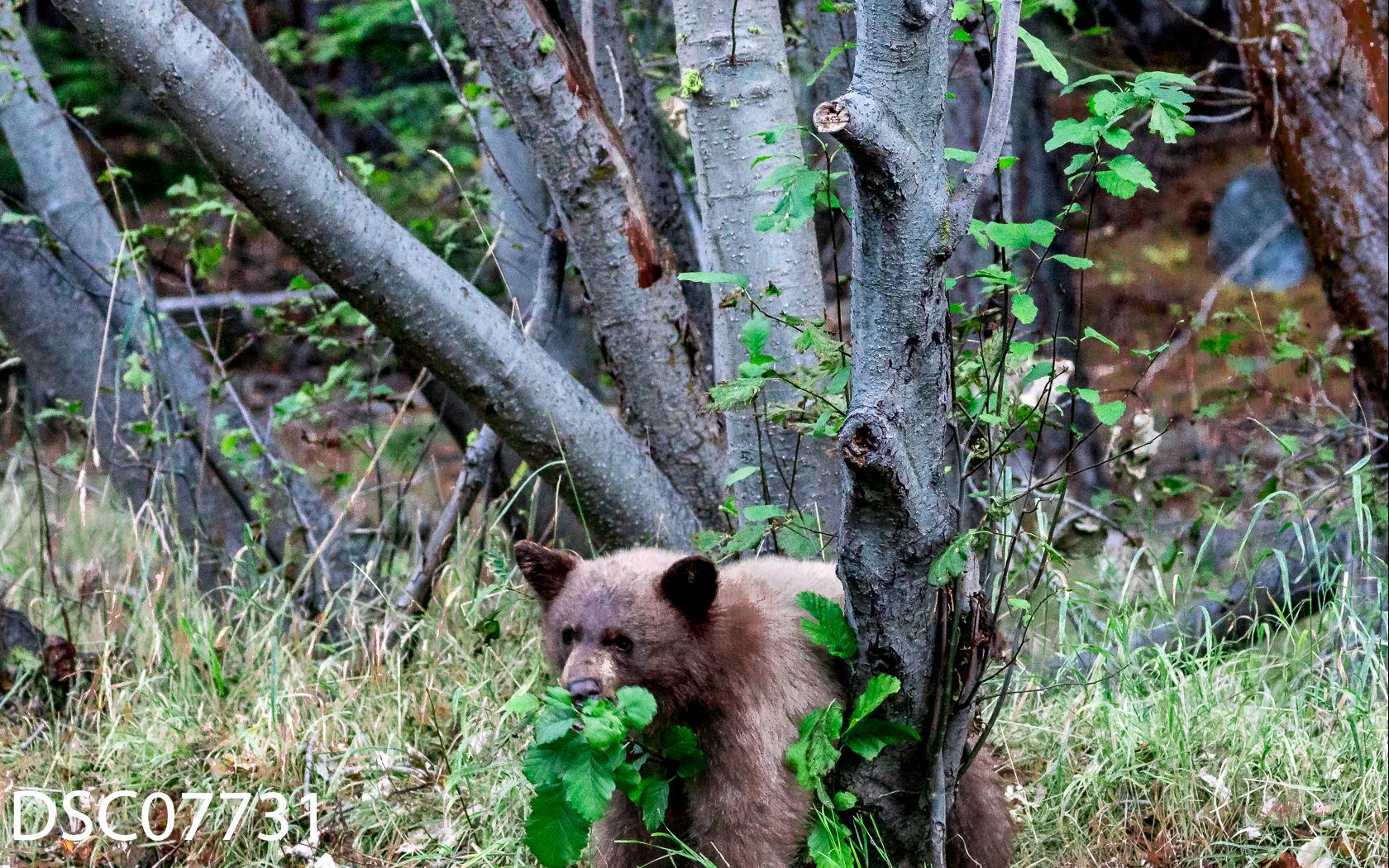 Just Bears-046.jpg