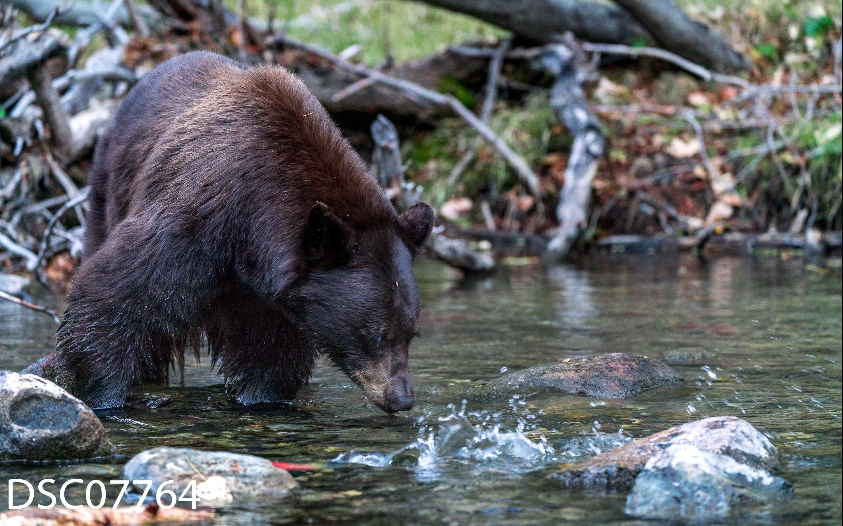 Just Bears-048.jpg