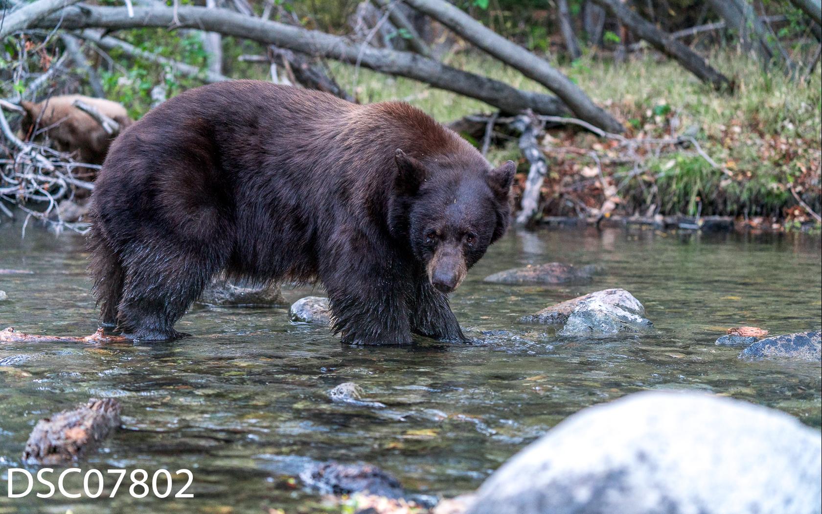 Just Bears-049.jpg