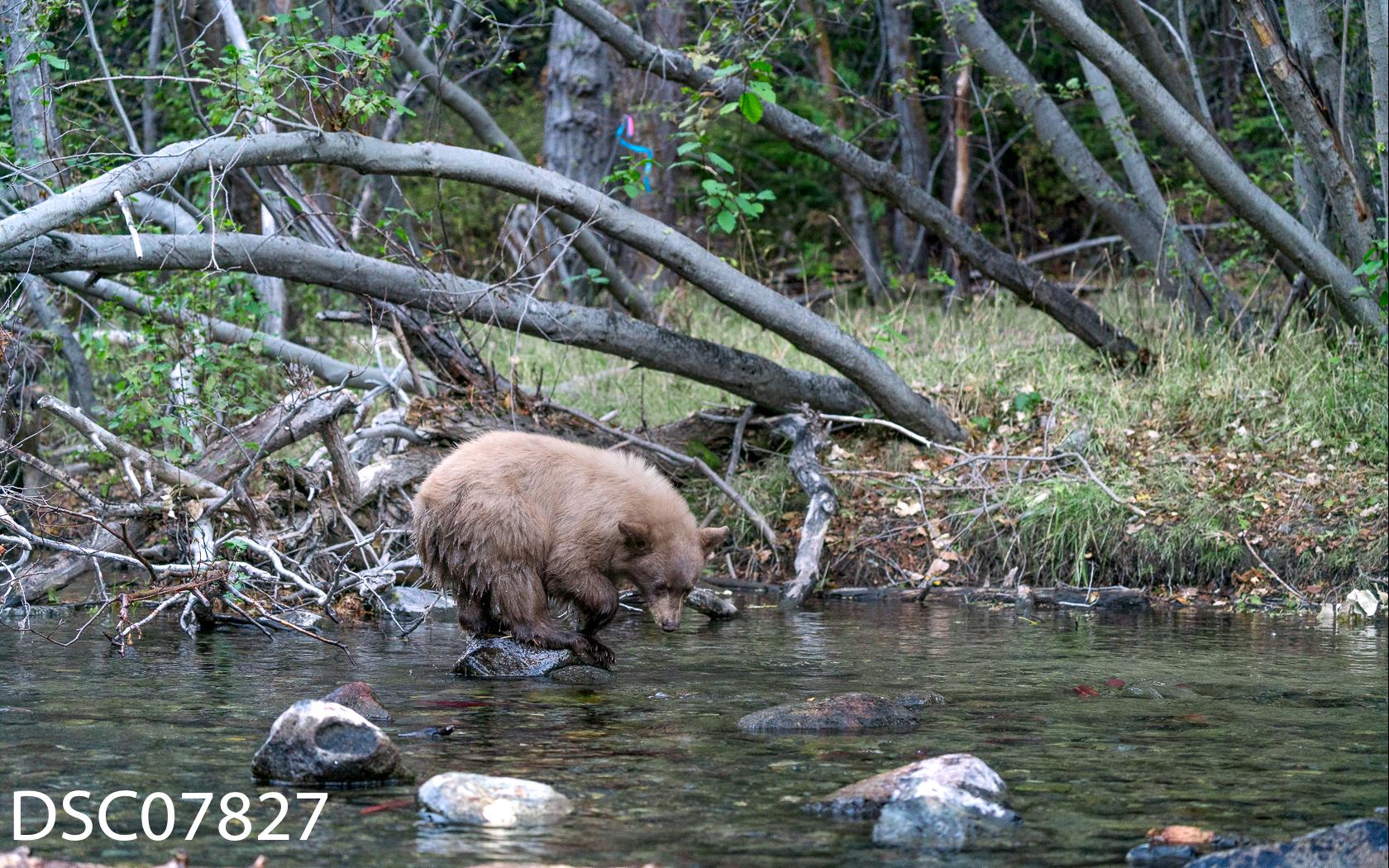 Just Bears-051.jpg