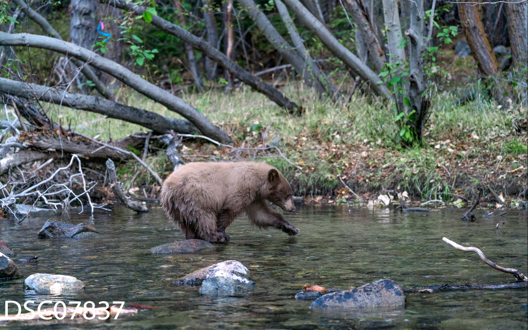 Just Bears-052.jpg