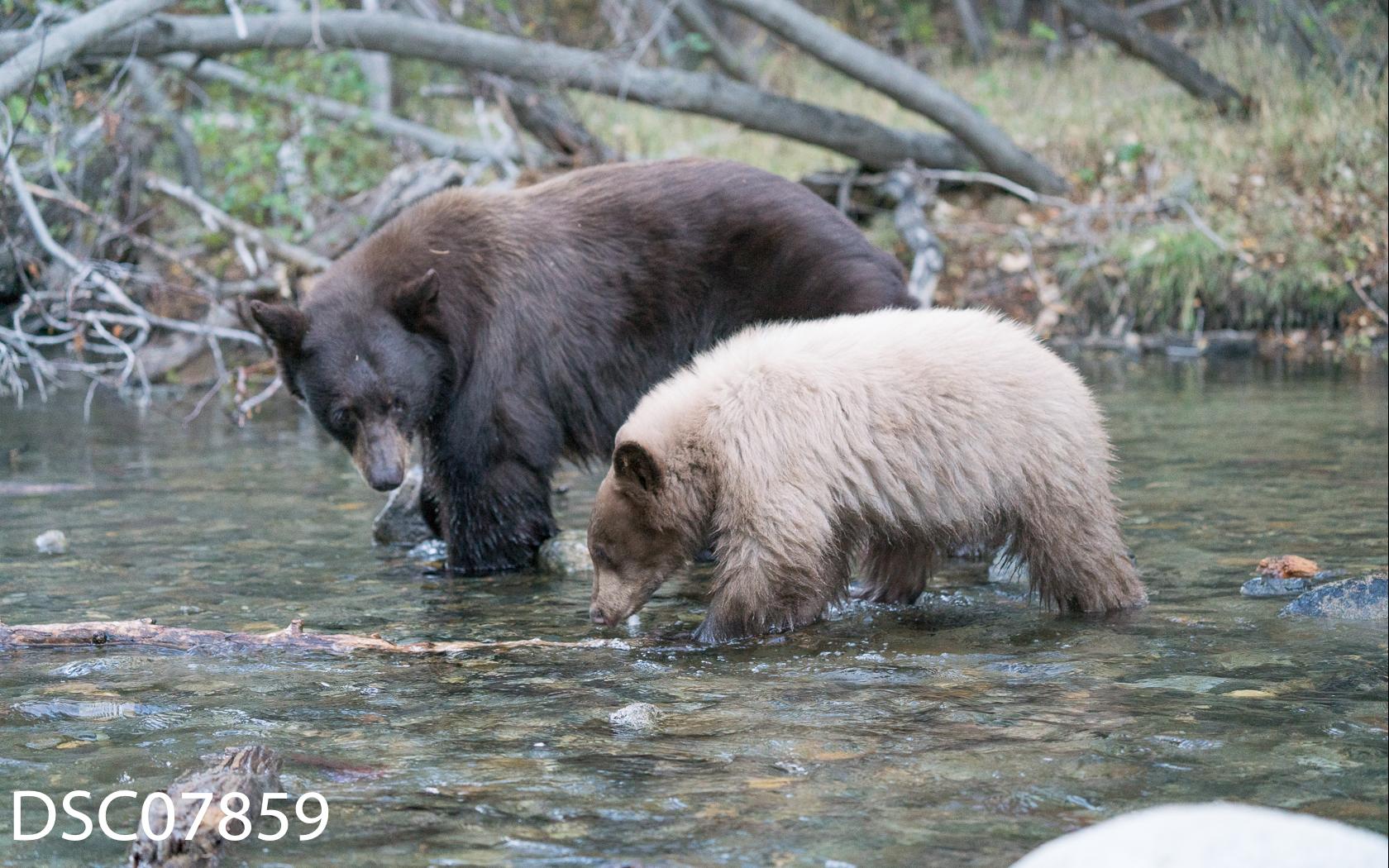 Just Bears-053.jpg