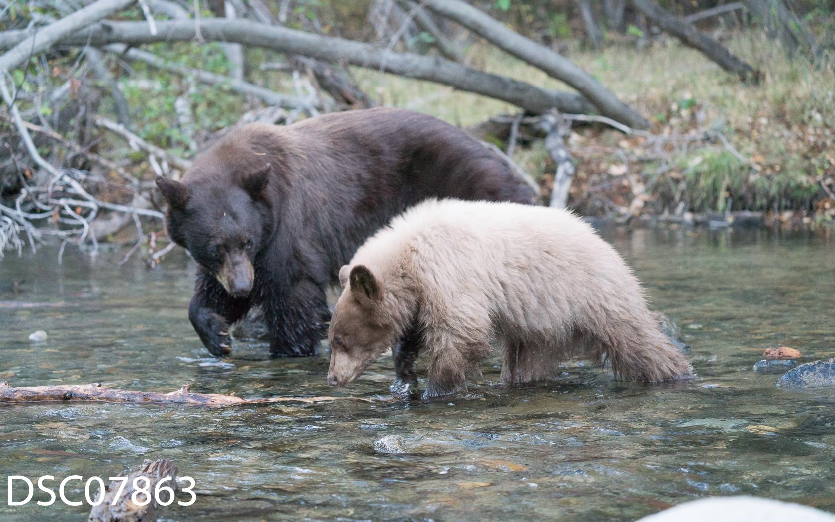 Just Bears-054.jpg